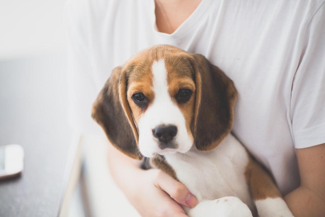 Att tänka på innan hunden kommer hem