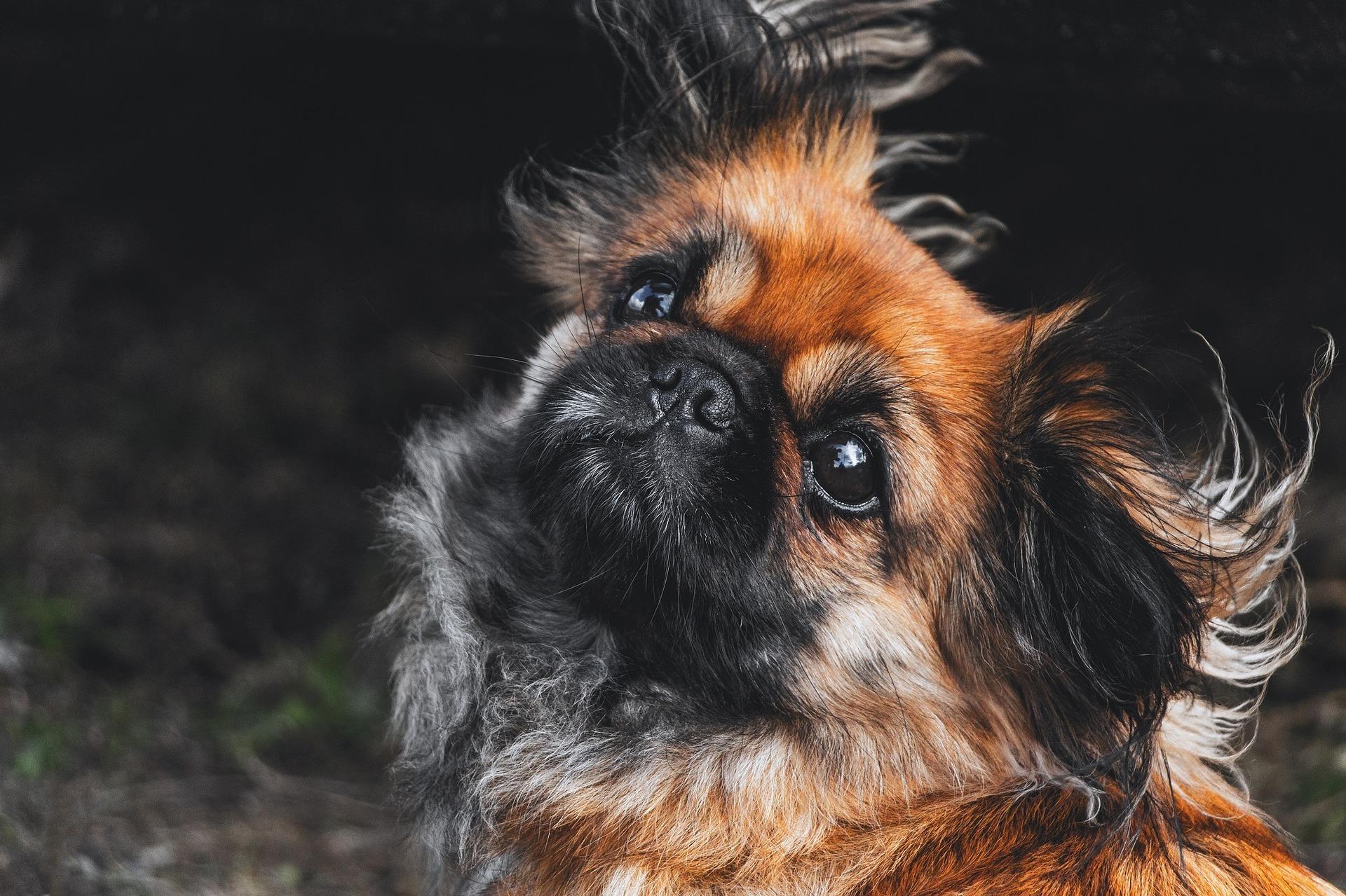 Vad kostar det att ha hund?