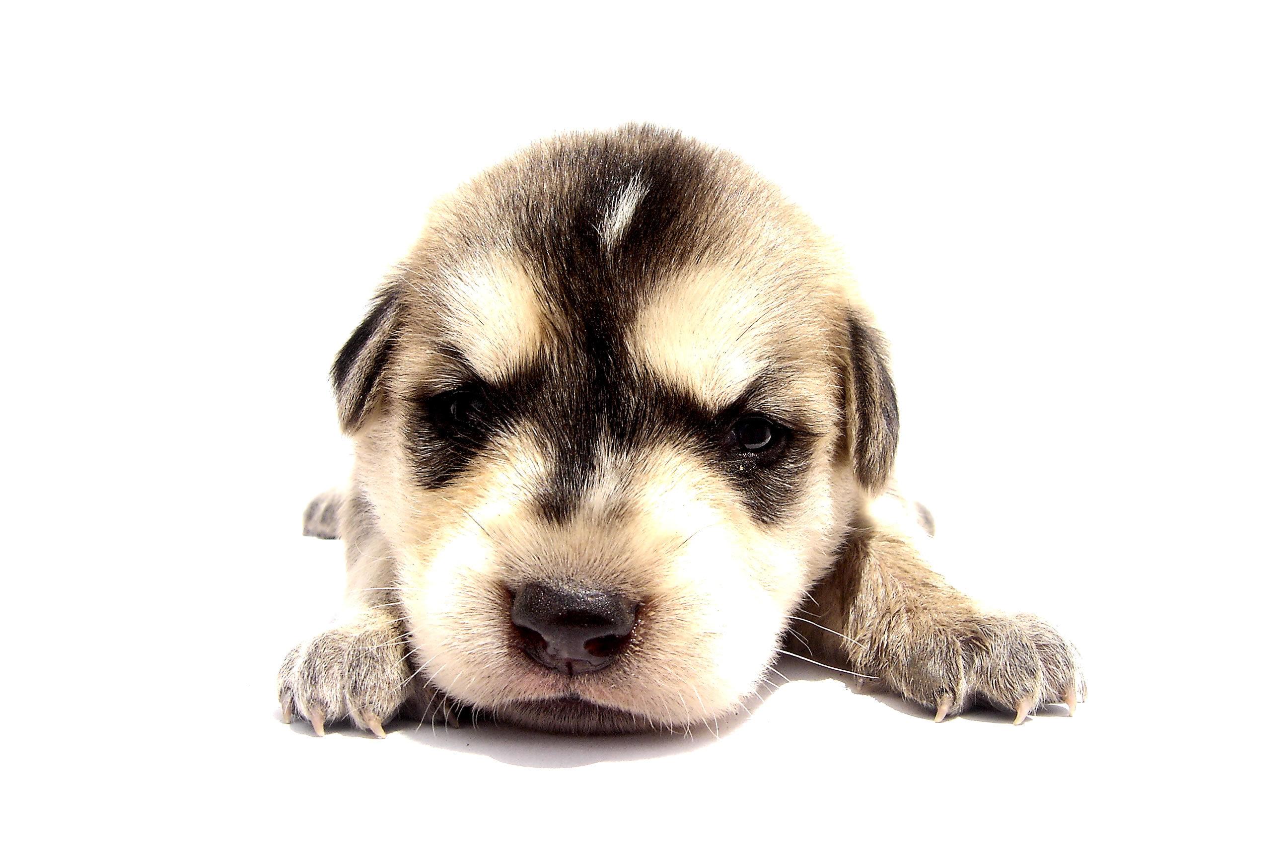Dags att skaffa hund – tänk på detta!